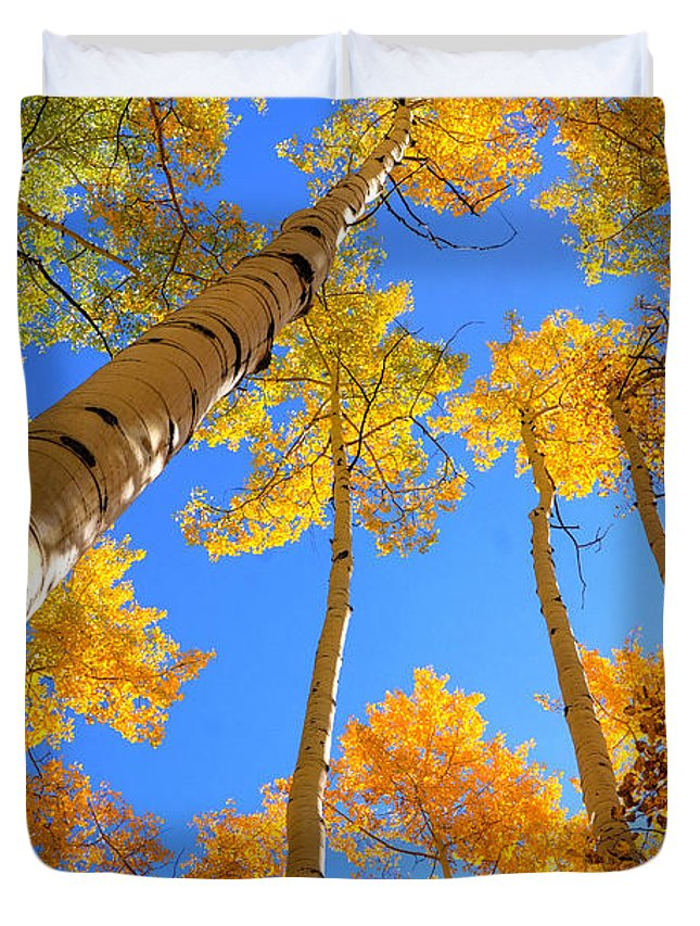 Aspens Duvet Cover featuring the photograph Over Your Head by David Ross