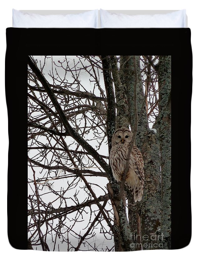 Owl Duvet Cover featuring the photograph Owl In Winter by Claire Bull