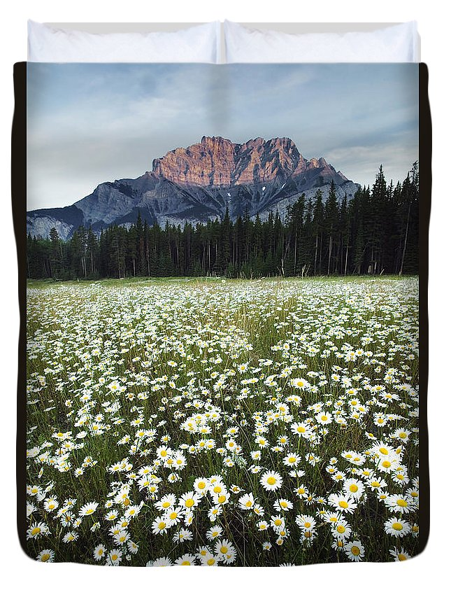 Light Duvet Cover featuring the photograph Ox-eyed Daisies And Cascade Mountain by Darwin Wiggett