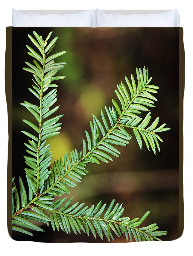 Beautiful Duvet Cover featuring the photograph Pacific Yew by Greg Vaughn - Printscapes
