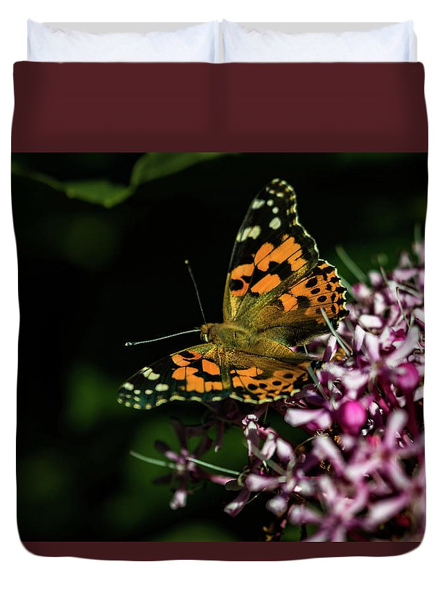 Jay Stockhaus Duvet Cover featuring the photograph Painted Lady by Jay Stockhaus