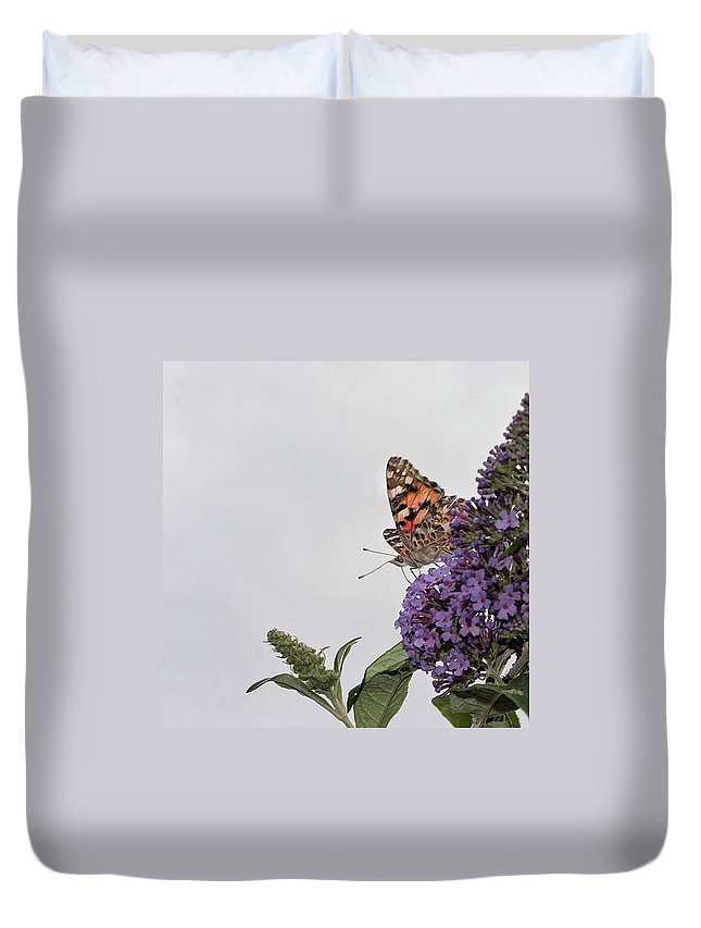 Insectsofinstagram Duvet Cover featuring the photograph Painted Lady (vanessa Cardui) by John Edwards