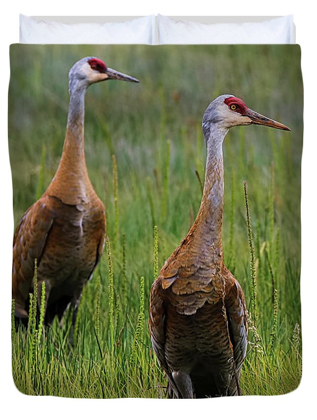 Cranes Duvet Cover featuring the photograph Pair Of Sandhill Cranes by Amber D Hathaway Photography