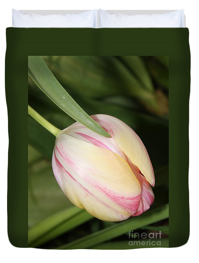 Tulip Duvet Cover featuring the photograph Pale Yellow And Pink Tulip by Carol Groenen