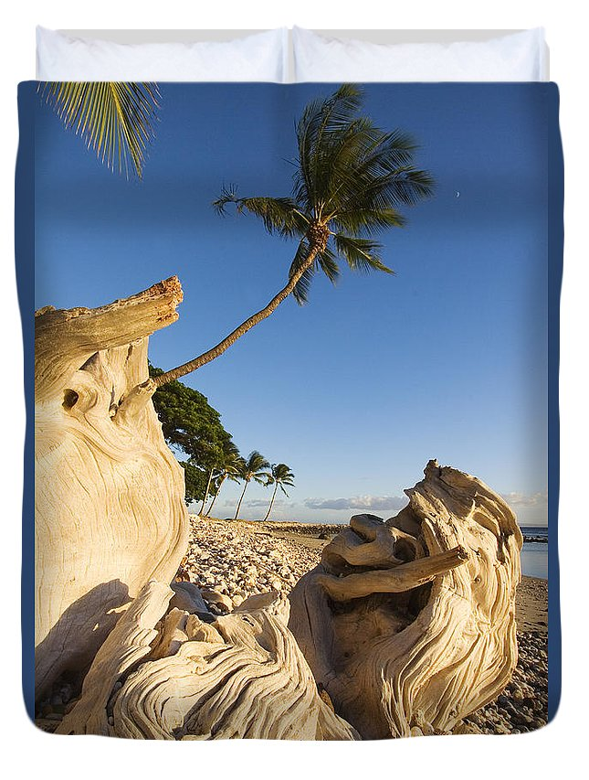 Afternoon Duvet Cover featuring the photograph Palm And Driftwood by Ron Dahlquist - Printscapes