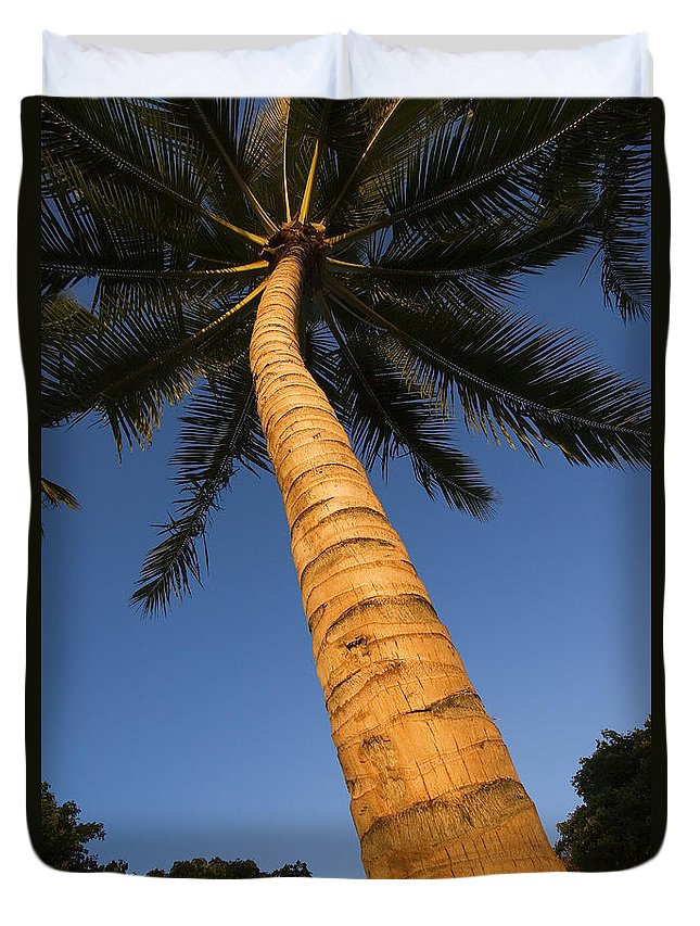 Afternoon Duvet Cover featuring the photograph Palm In Blue Sky by Ron Dahlquist - Printscapes