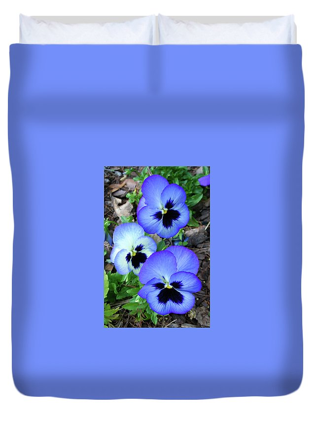 Flowers Duvet Cover featuring the photograph Pansies 0823 by Guy Whiteley