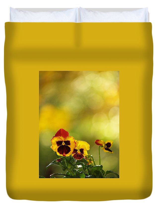 Flowers Duvet Cover featuring the photograph Pansies In The Autumn Glow by Dorothy Lee