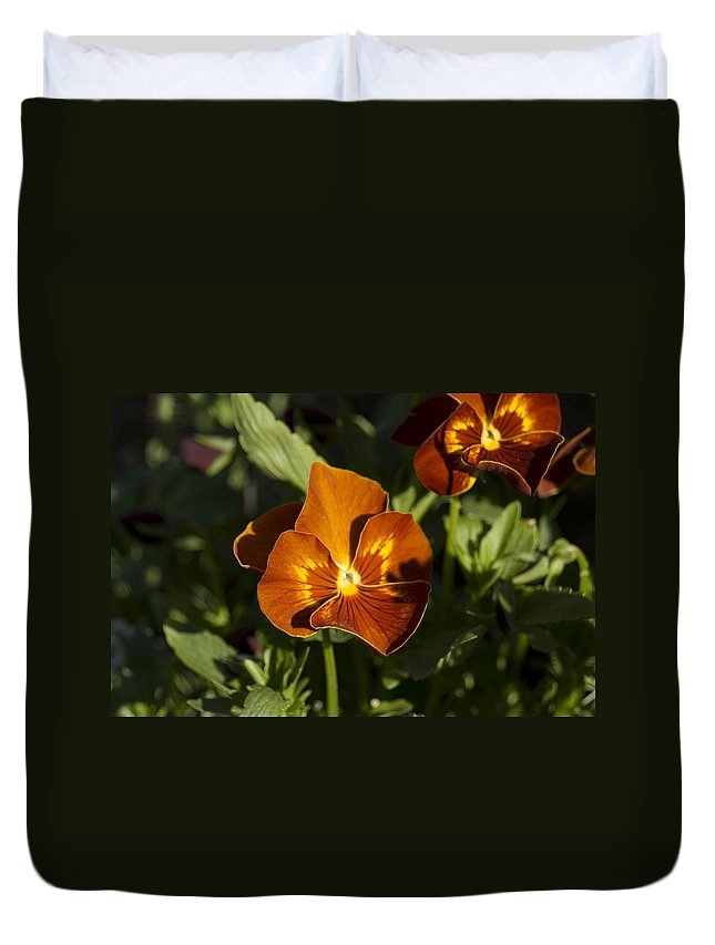 Pansy Duvet Cover featuring the photograph Pansies by Sara Stevenson