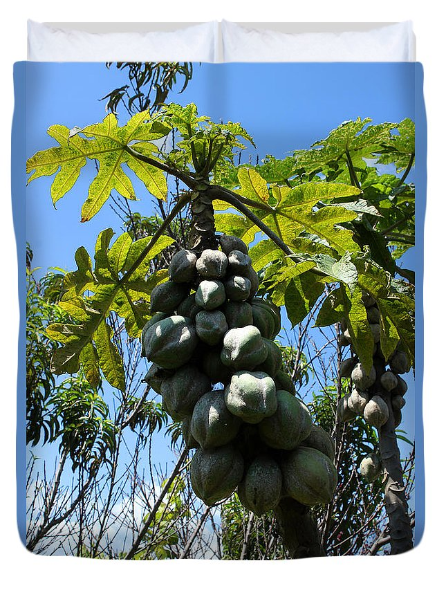 Papaya Duvet Cover featuring the photograph Papayas On A Tree by Robert Hamm
