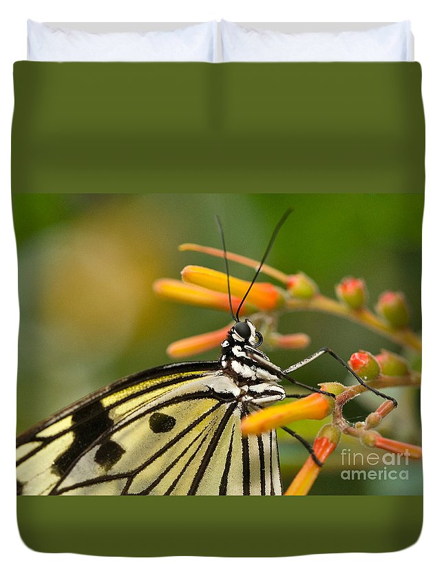 Butterfly Duvet Cover featuring the photograph Paper Kite Butterfly With Orange Flower by Louise Heusinkveld