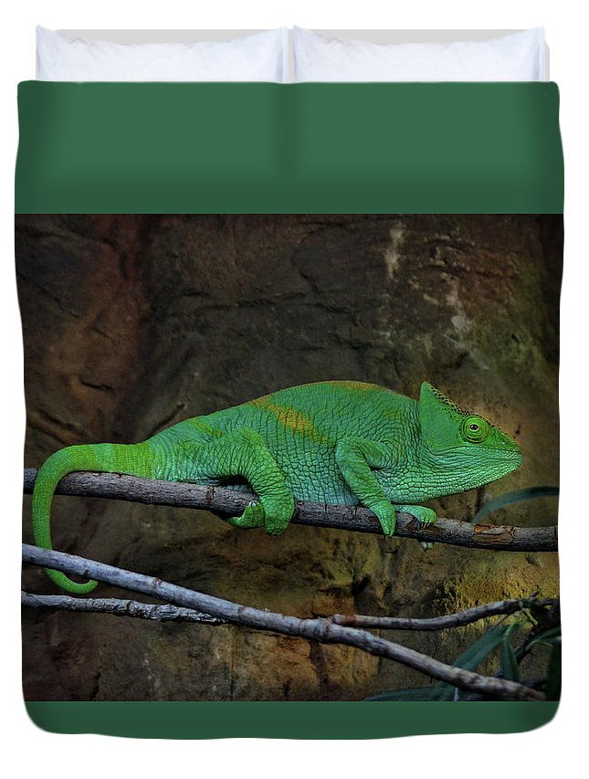 Chameleon Duvet Cover featuring the photograph Parson's Chameleon by Doc Braham