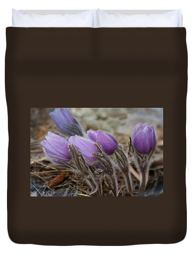 Pasque Flower Duvet Cover featuring the photograph Pasque Flower Watercolor by Heather Coen