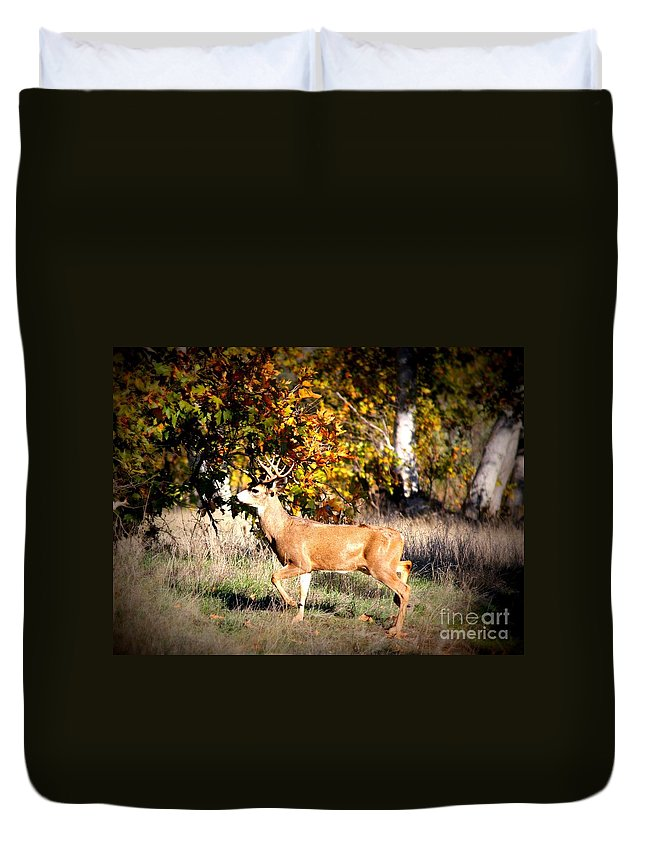 Animal Duvet Cover featuring the photograph Passing Buck In Autumn Field by Carol Groenen
