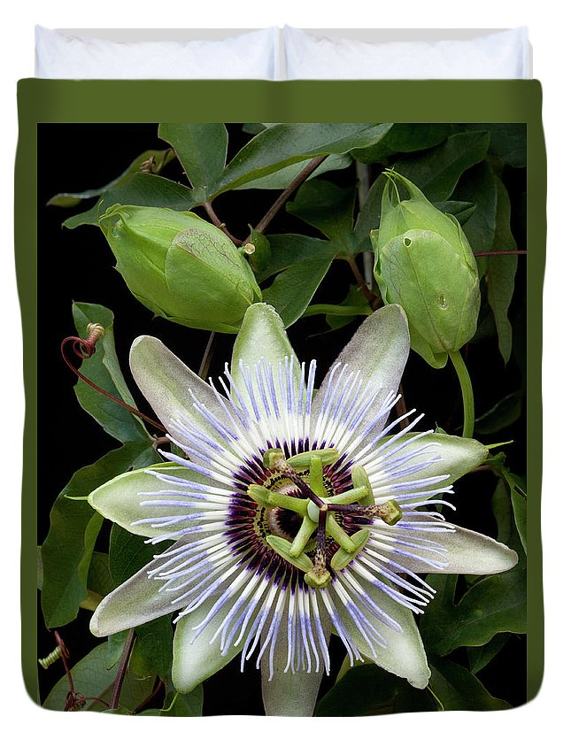 Passion Flower Duvet Cover featuring the photograph Passion Flower 1 by George Sanquist