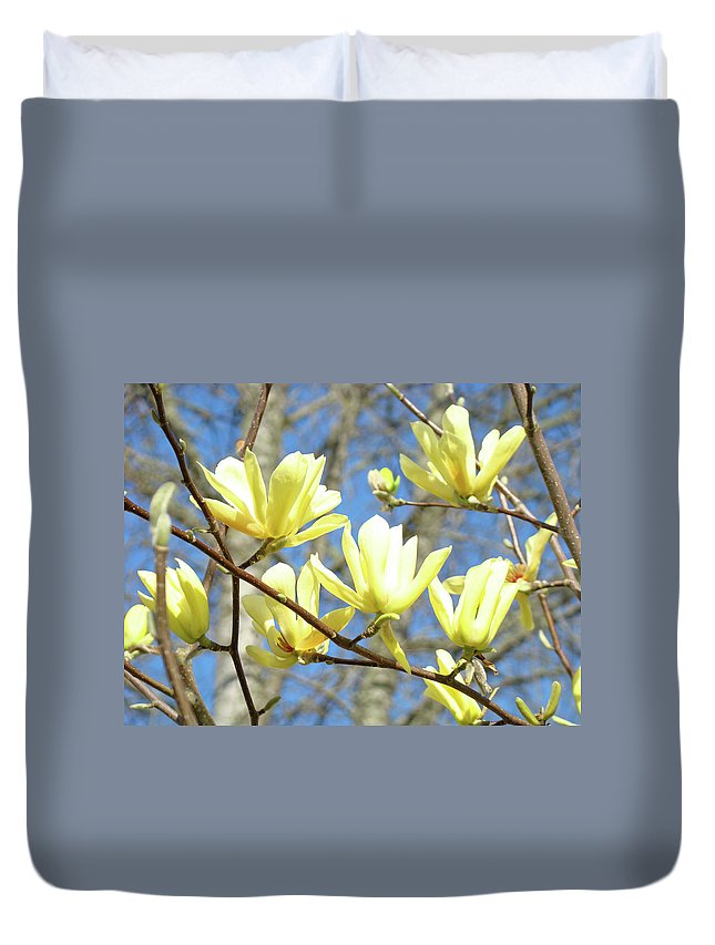 Magnolia Duvet Cover featuring the photograph Pastel Yellow Magnolia Tree Flowers by Baslee Troutman