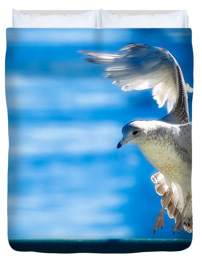 Animal Duvet Cover featuring the photograph Peace Gull by Rich Leighton
