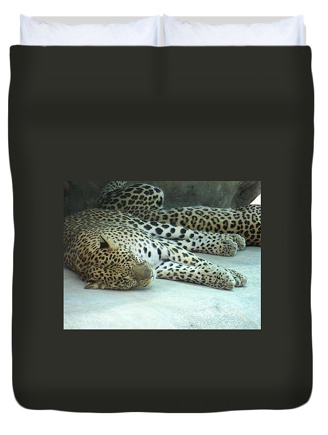 Chetah Duvet Cover featuring the photograph Peaceful Sleep by Laurie Paci