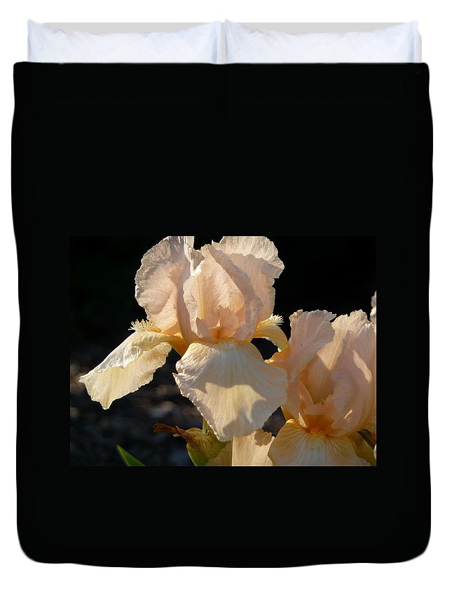 Flower. Iris Duvet Cover featuring the photograph Peach Bearded Iris by Ruth Kamenev