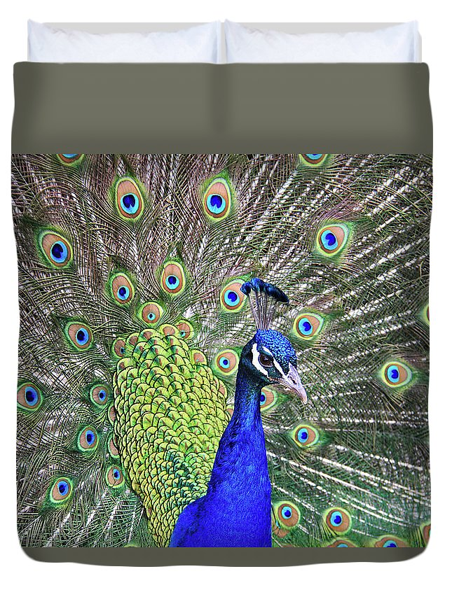 Peacock Duvet Cover featuring the photograph Peacock Colors by Scott Mahon
