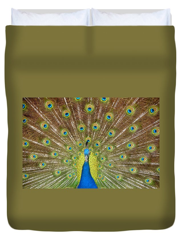 Peacock Duvet Cover featuring the photograph Peacock by David Lee Thompson