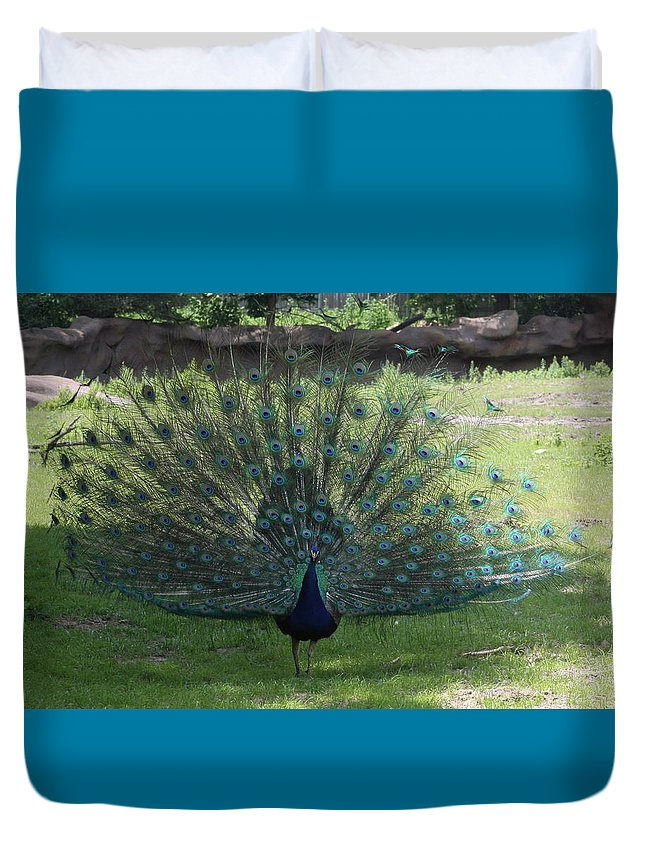 Peacock Duvet Cover featuring the photograph Peacock by Michelle Miron-Rebbe