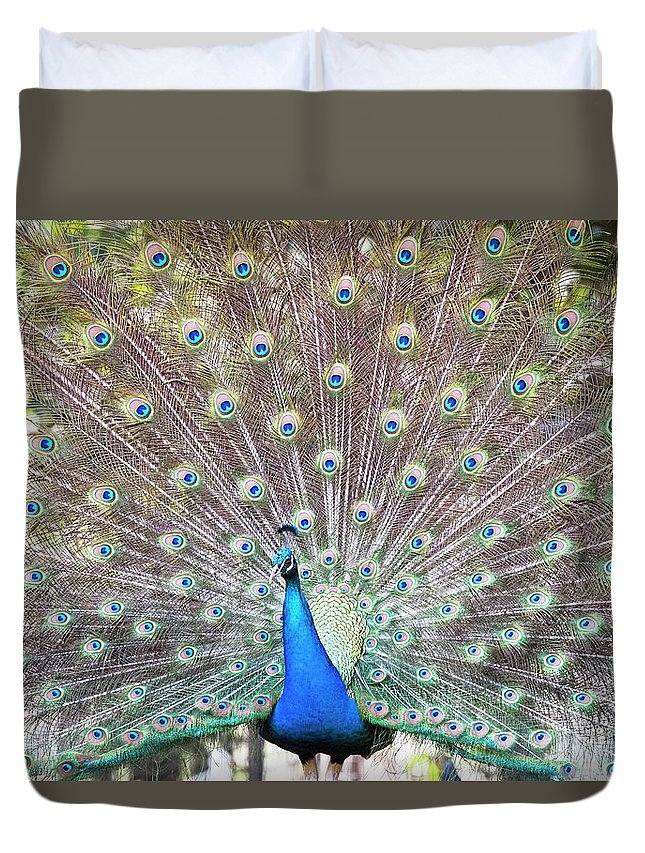 Peacock Duvet Cover featuring the photograph Peacock Show by Jodie Nash