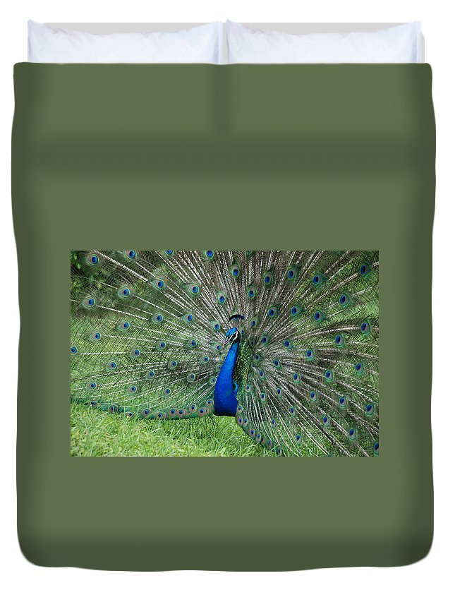 Peacock Duvet Cover featuring the photograph Peacocks Glory by Rob Hans