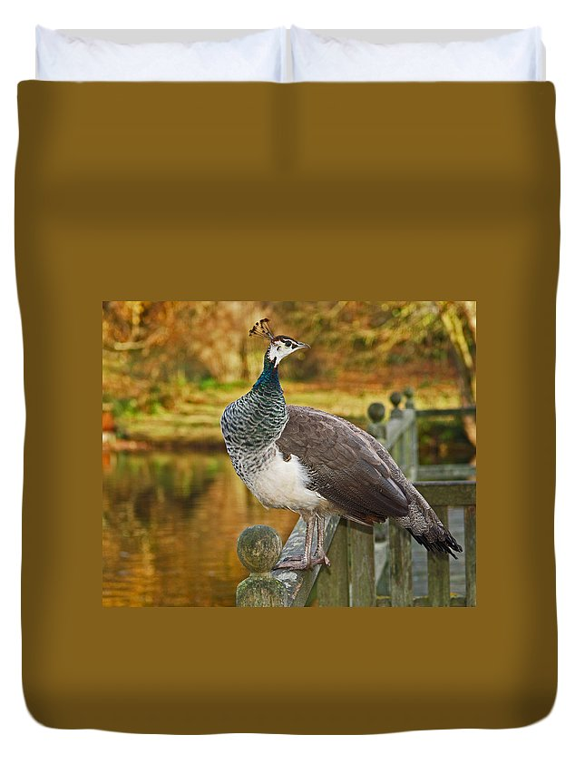 Peahen Duvet Cover featuring the photograph Peahen In Autumn by Bel Menpes