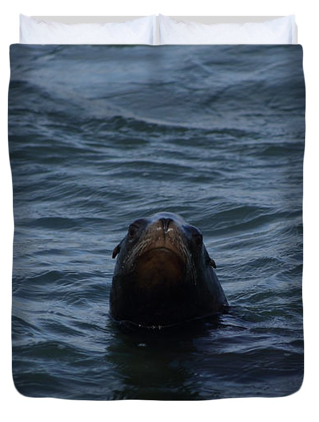 Seal Duvet Cover featuring the photograph Peakaboo by Damien Pennington