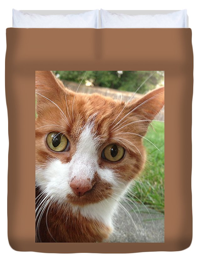 Orange Tabby Cat Duvet Cover featuring the photograph Peek A Boo - I See You by Maria Malayter