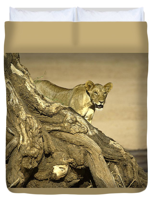 Africa Duvet Cover featuring the photograph Peeking Out by Michele Burgess