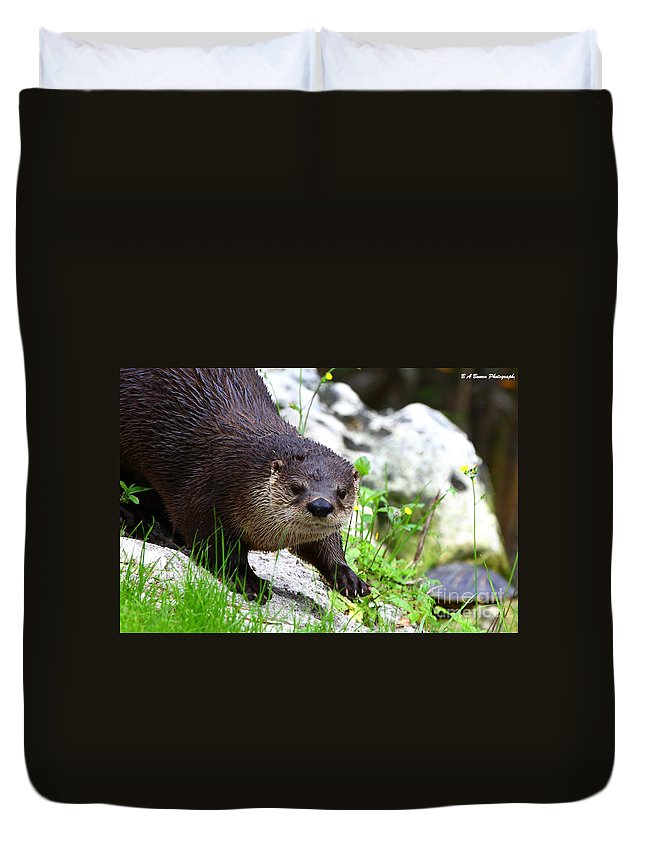 Otter Duvet Cover featuring the photograph Peering Otter by Barbara Bowen