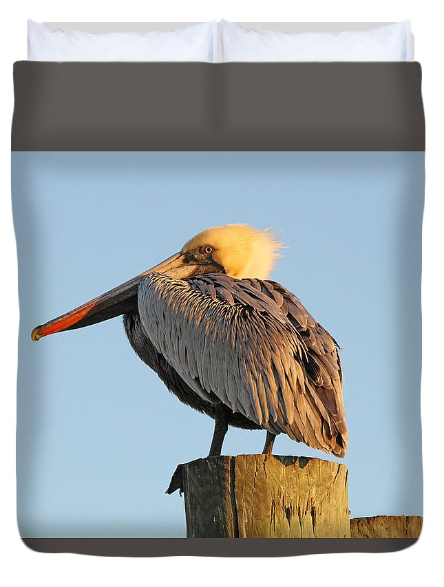 Pelican Duvet Cover featuring the photograph Pelican Feathers by Jim Clark