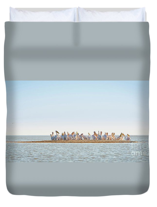 Pelicans Duvet Cover featuring the photograph Pelican Flock by Tim Hester