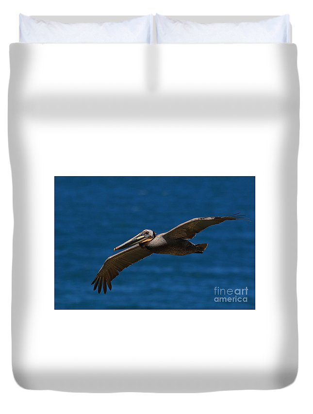 Brown Duvet Cover featuring the photograph Pelican Glide by Craig Corwin