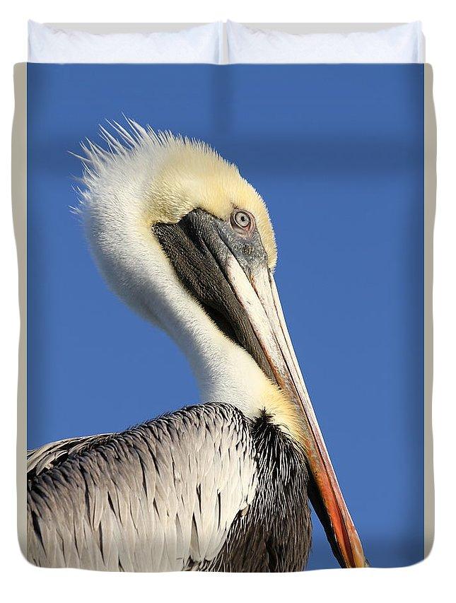 Pelican Duvet Cover featuring the photograph Pelican Mohawk by Jim Clark