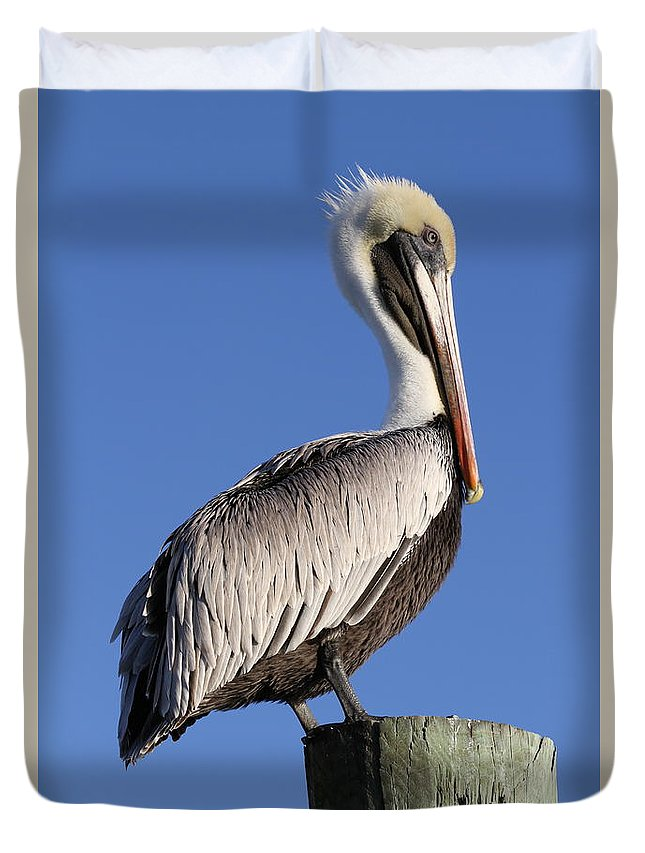 Pelican Duvet Cover featuring the photograph Pelican Pose by Jim Clark