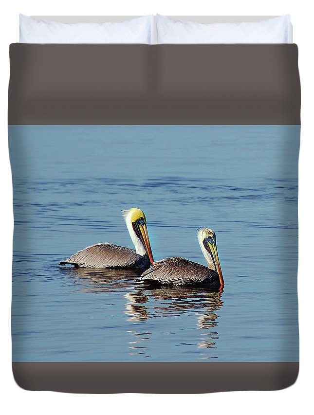 Pelican Duvet Cover featuring the painting Pelicans 2 Together by Michael Thomas