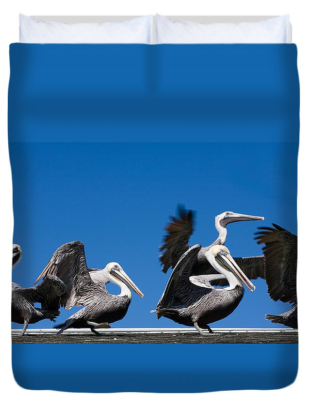 Pelicans Duvet Cover featuring the photograph Pelicans Take Flight by Mal Bray