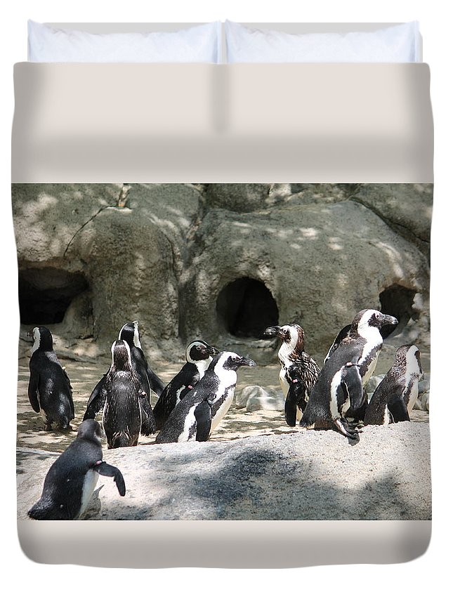 Penquins Duvet Cover featuring the photograph Penquins Homes by Minnie Davis