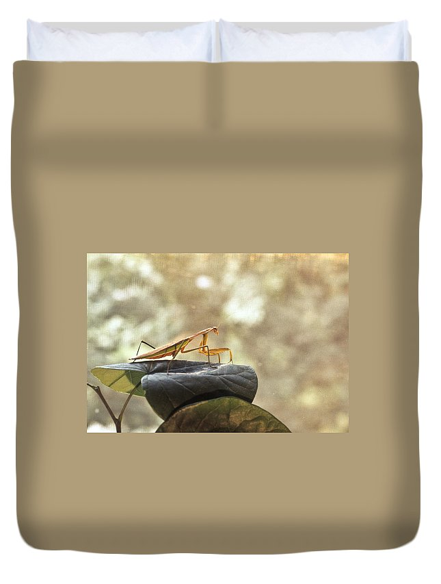 Praying Duvet Cover featuring the photograph Pensive Mantis by Douglas Barnett