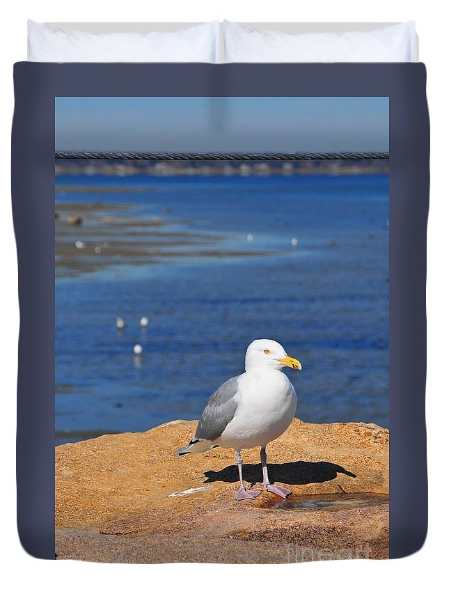 Seagull Duvet Cover featuring the photograph Pensive Seagull by Catherine Reusch Daley