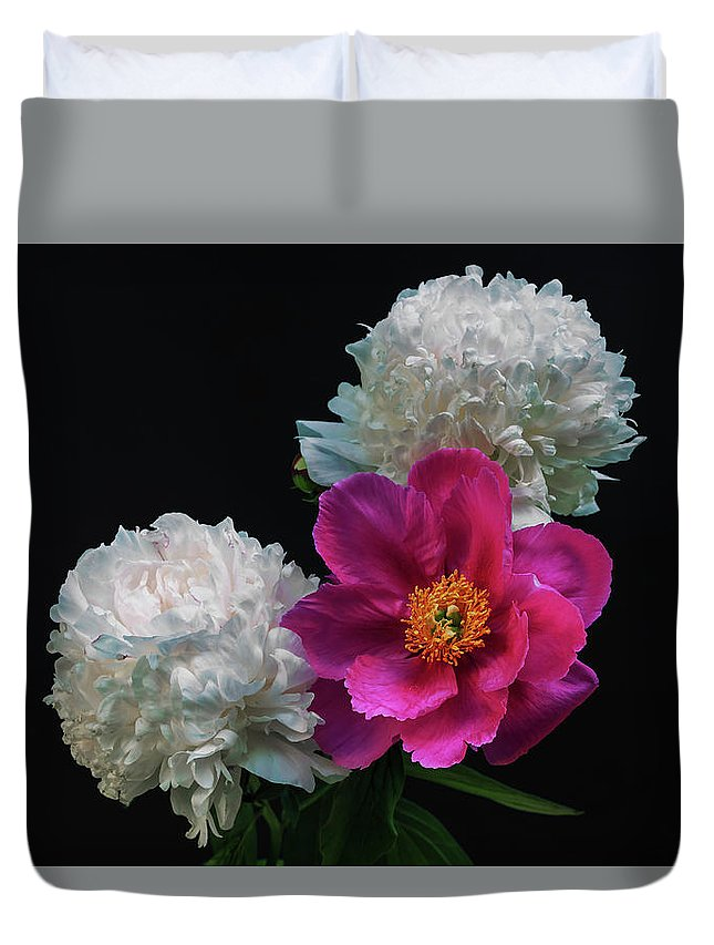 George Westermak Duvet Cover featuring the photograph Peonies - Beautiful Flowers - On The Right Is One Of The First Places Among The Garden Perennials by George Westermak