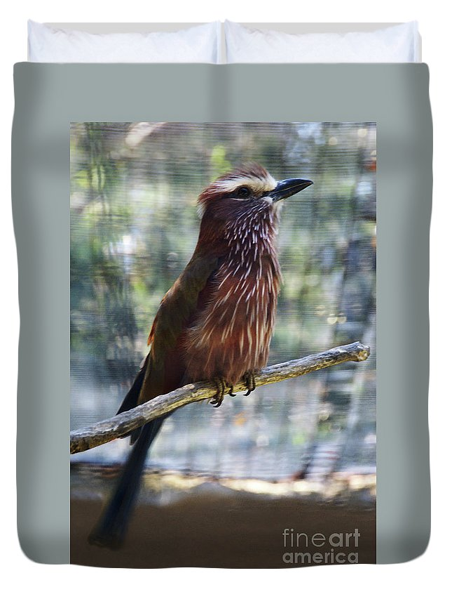 Bird Duvet Cover featuring the photograph Perched - 3 by Linda Shafer