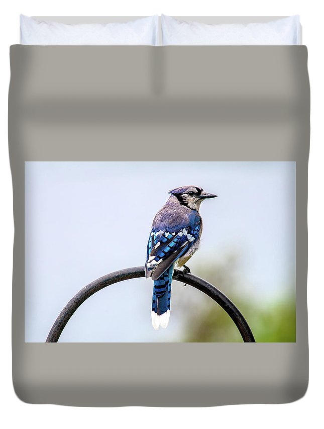 Clare Mi Usa Duvet Cover featuring the photograph Perched Blue Jay by Onyonet Photo Studios