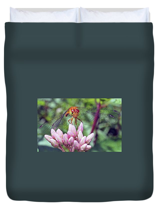 Cazenovia Dragonfly Duvet Cover featuring the photograph Perched by John Kennedy