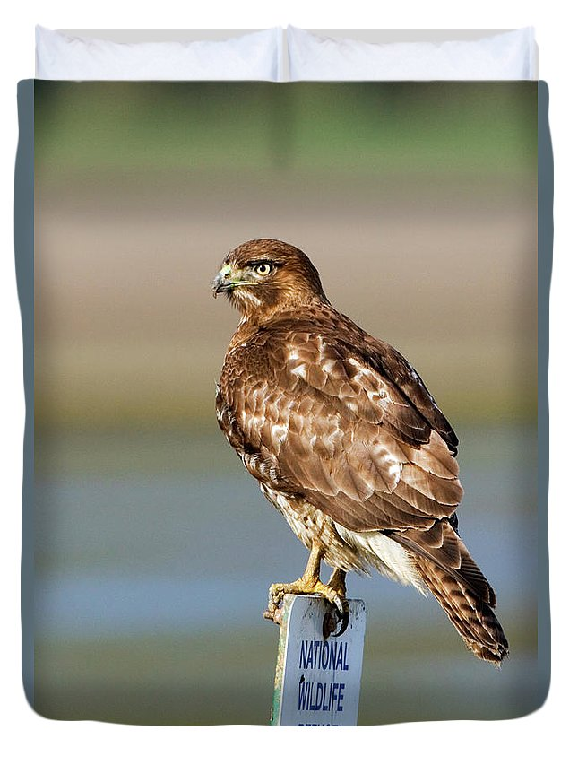Hawk Duvet Cover featuring the photograph Perched Red Tail Hawk by Randall Ingalls