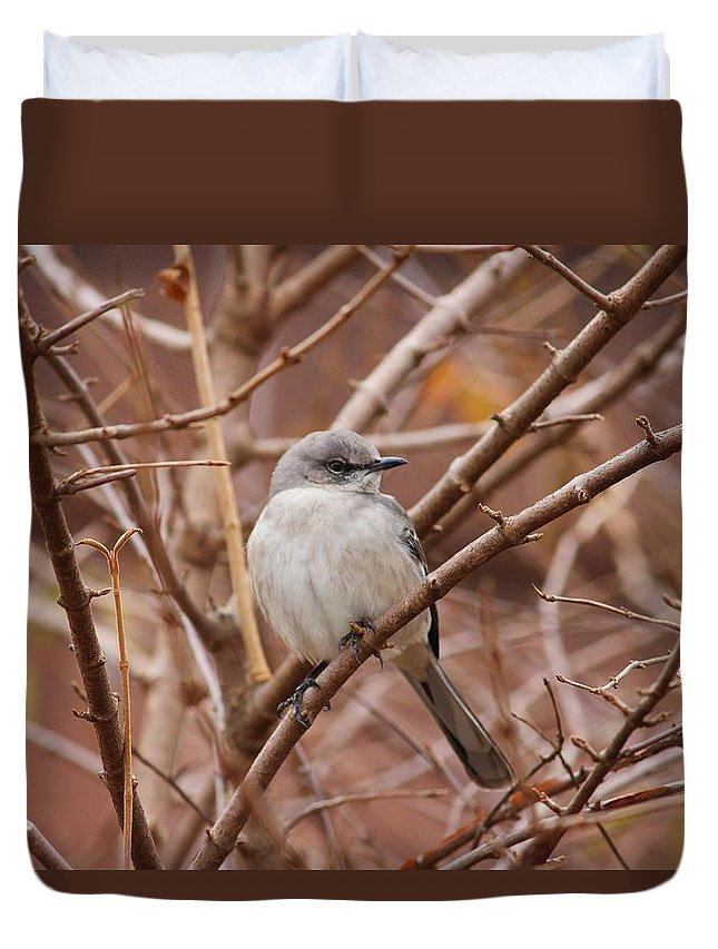 Nature Duvet Cover featuring the photograph Perching On A Winter's Day by Aaliyah Muhammad