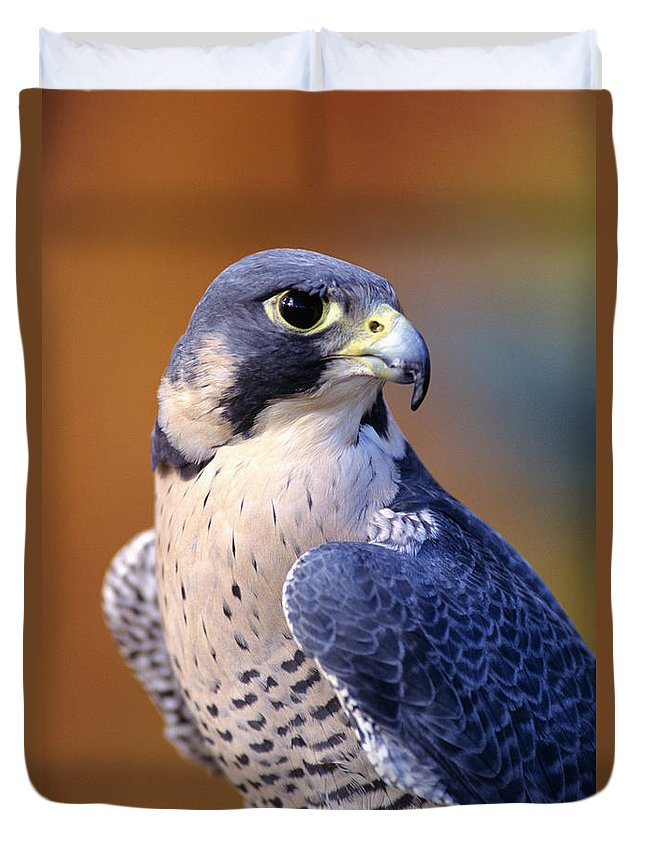 Animal Art Duvet Cover featuring the photograph Peregrine Falcon by John Hyde - Printscapes